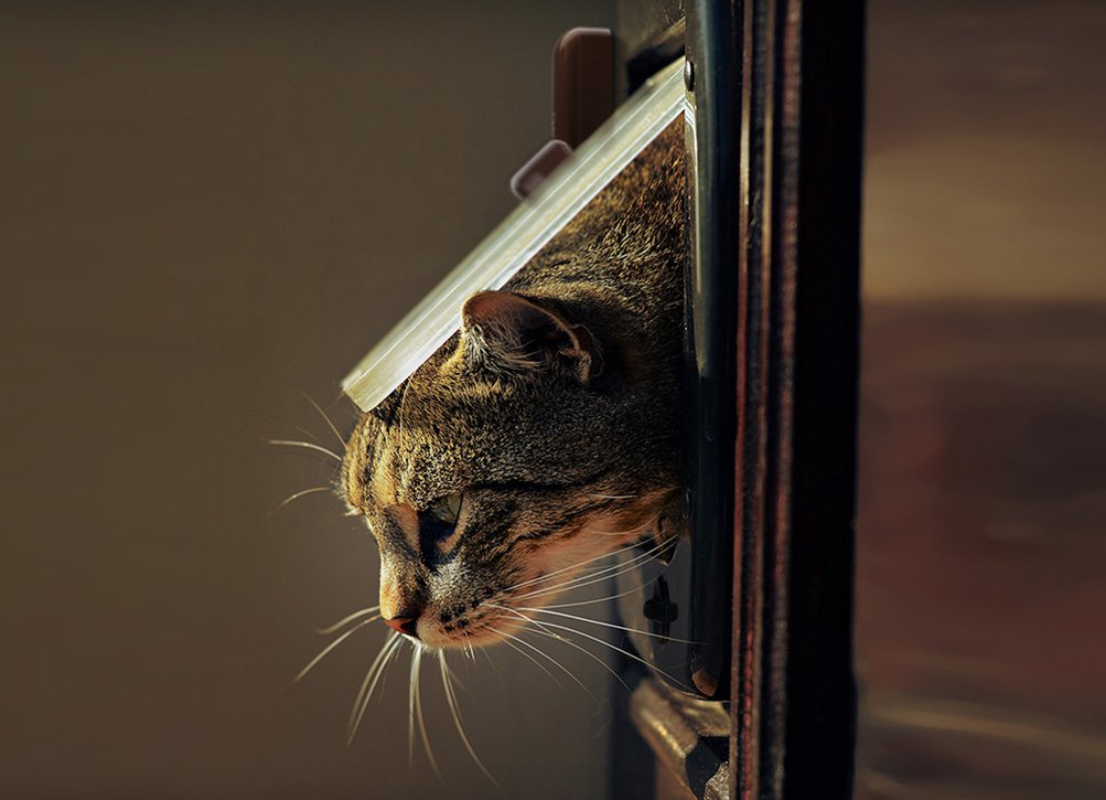 Tür Fenster Sensor Smart Home Lösungen mobile - Smart Home München